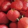 6 Immancabili Colori nella Dieta e Menù del Ristorante