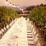 Turismo del Vino in Roero: Progettare Esperienze di Viaggio Enogastronomiche